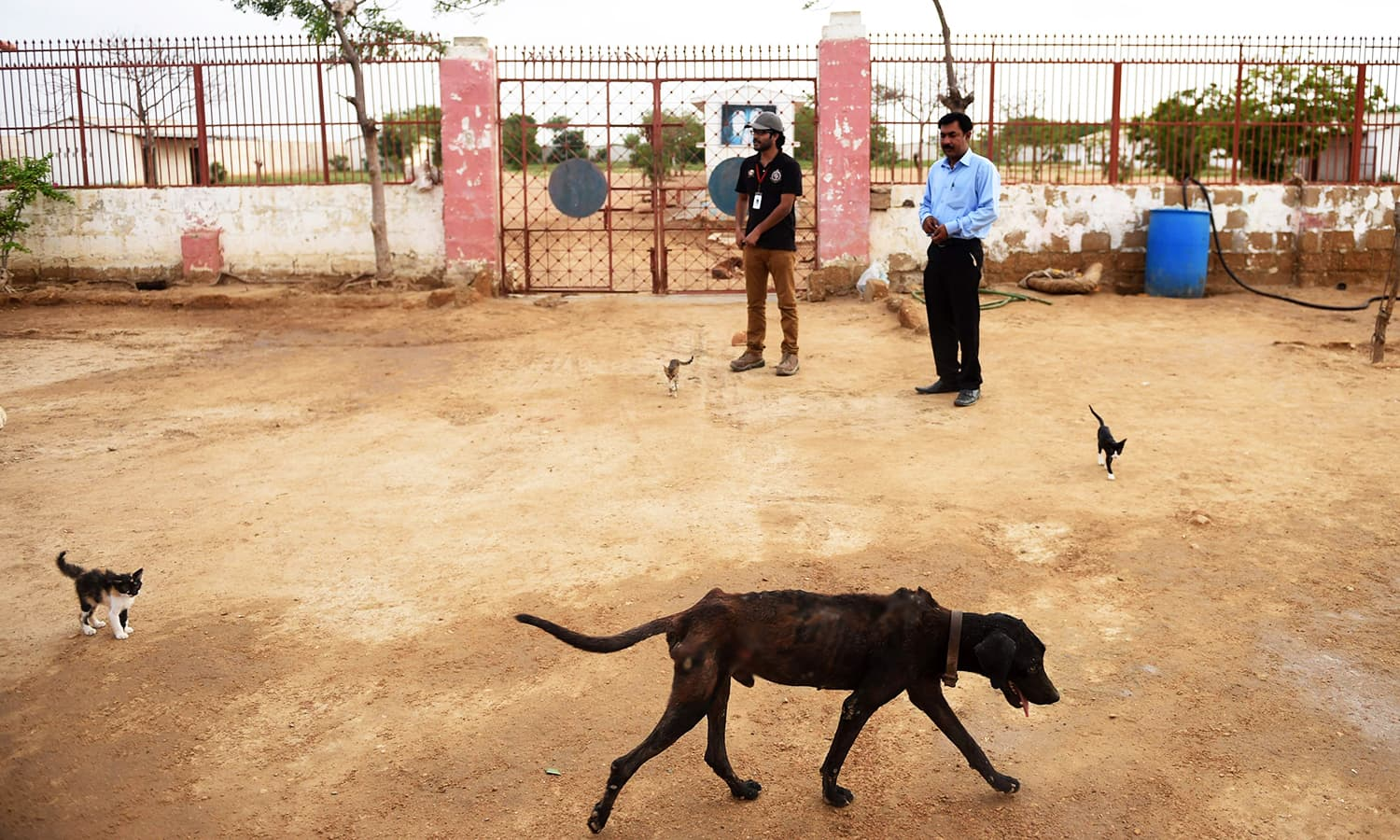 Veterinarian Khalid Memon looks at sick and injured cats and a stray dog at the Edhi Animal Home. — AFP