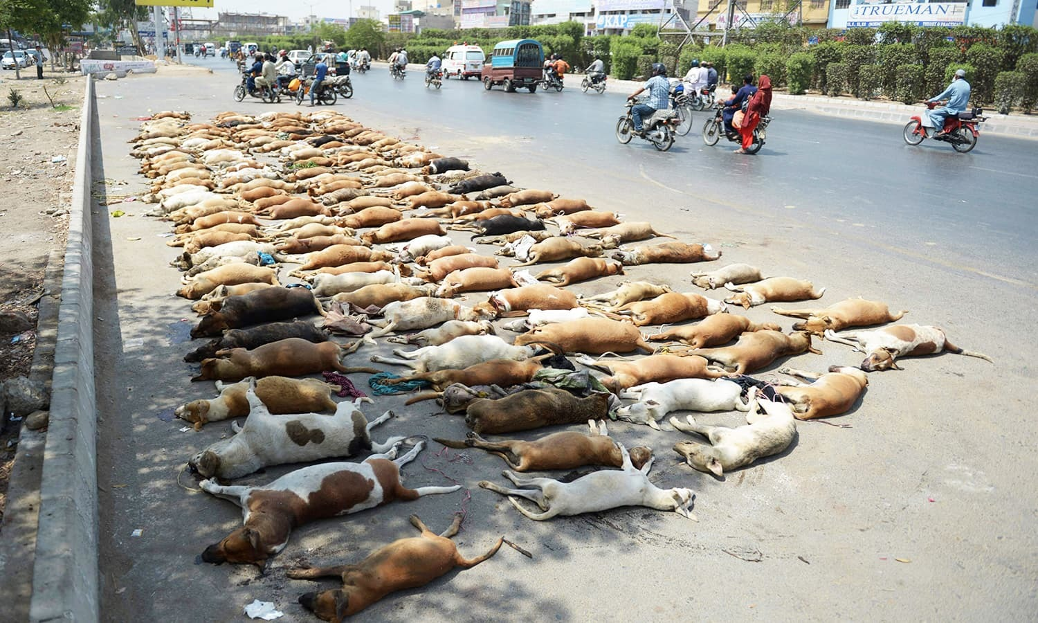 In this May 12 photo, commuters drive past a pile of stray dog carcasses, culled to control animal population in Karachi. — AFP