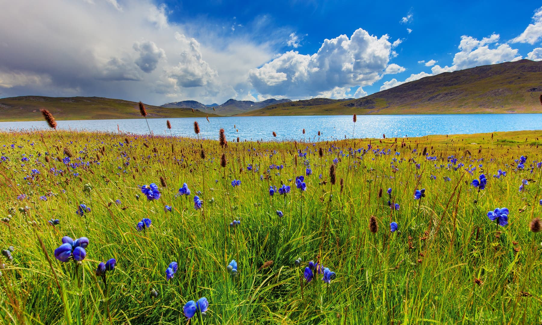 The stunning backdrop of Sheosar Lake in the plains of Deosai.