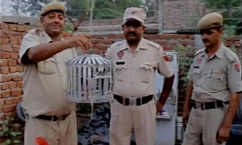 Indian police display the captured pigeon in a cage. ─ Photo courtesy ANI Twitter