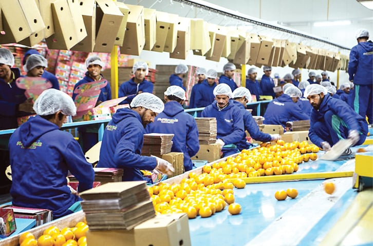 Packing fruit for trade: Collaboration between the United Nations Industrial Development Organisation and the European Union fosters inclusive growth and sustainable development. - Photo courtesy: UNDP