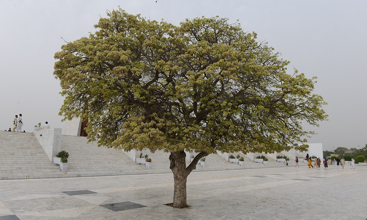 A tree stands amidst the marble flooring at Quaid-e-Azam's mausoleum