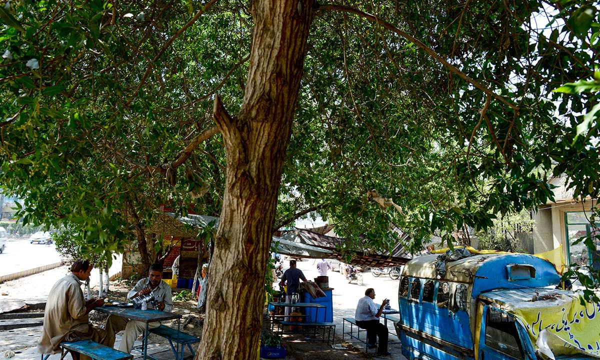 Customers of a roadside dhaba enjoy their lunch under the shade of trees in PECHS
