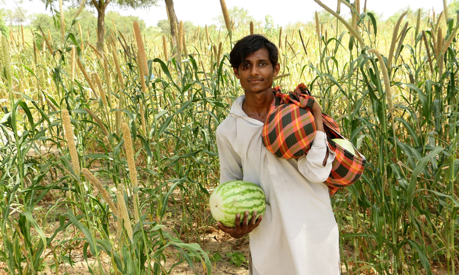 Watermelons are one of several crops grown in the desert.