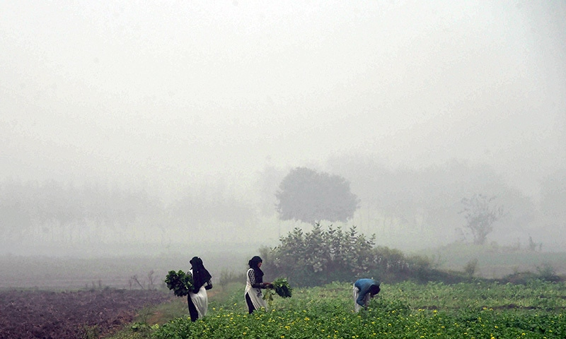 Women work in a field on a smoggy day in Lahore.─AFP