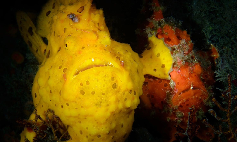 پانی کے اندر بیٹھے مینڈک کی تصویر بھی ایوارڈ لے اڑی—فوٹو: بشکریہ comedywildlifephoto.com