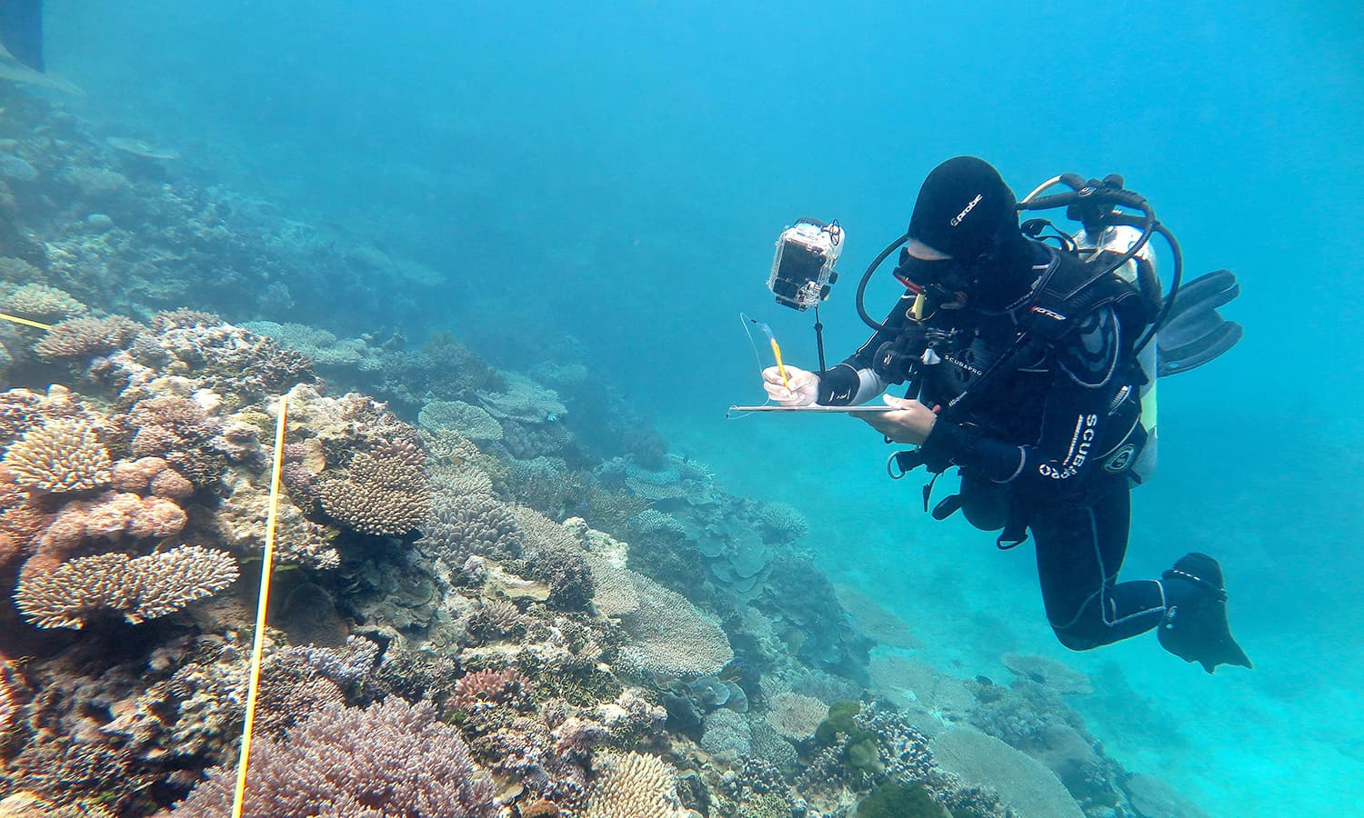 Largest coral die-off ever in Great Barrier Reef