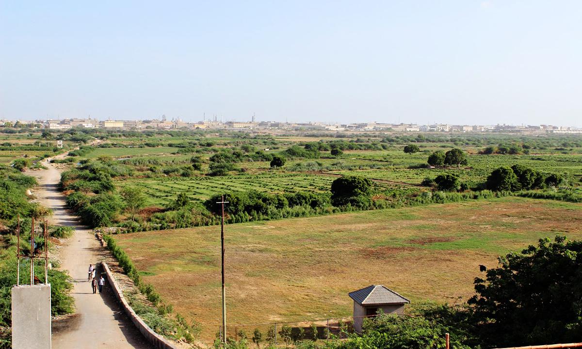View from Masood Raza's balcony overlooking vegetables fields behind Shah Faisal Colony Block 5 | Photographs by Saman Ghani Khan