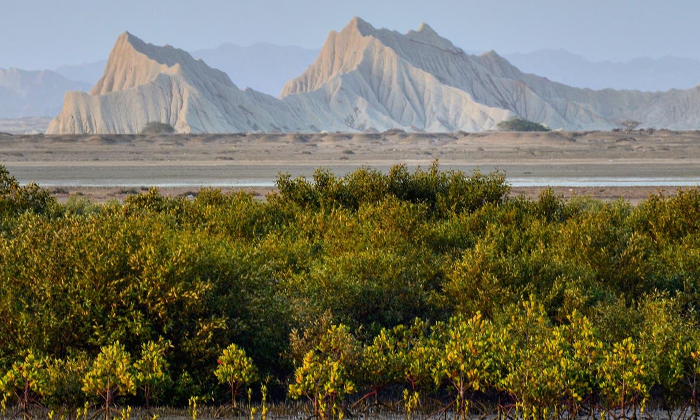 جزیرے پر موجود محدود سبزہ — تصویر عباس علی طور