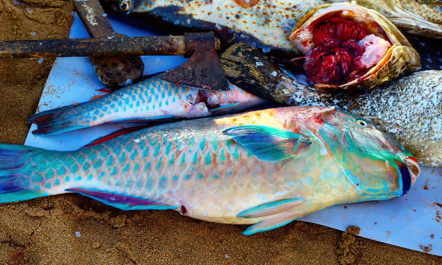 The fish that the fishermen on our boat caught while we were snorkelling.