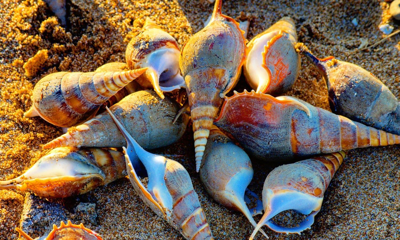 ساحل سمندر پر مختلف طرح کی سیپیاں پھیلی تھیں — تصویر عباس علی طور