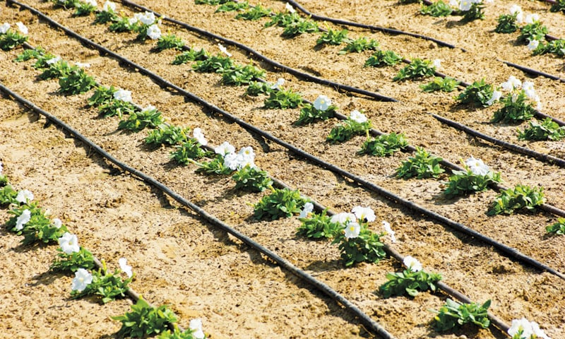 Drip irrigation — www.irrigationoutlet.com