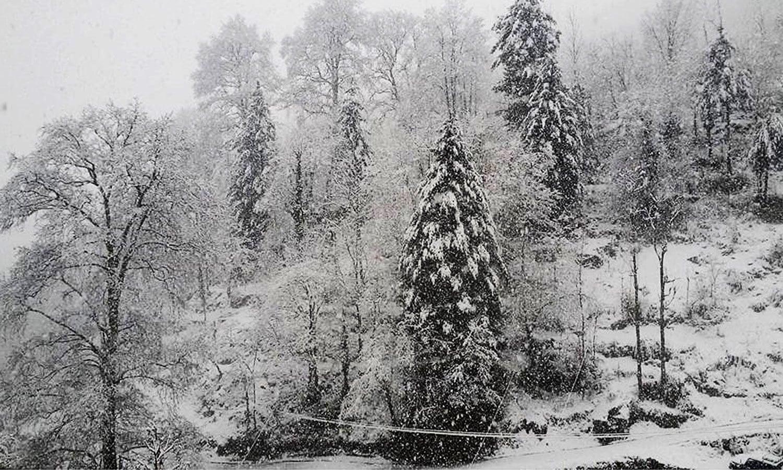 موسم سرما کی پہلی برف باری کے دوران الپوری میں ہر چیز نے برف کی چادر اوڑھ لی — فوٹو: آن لائن