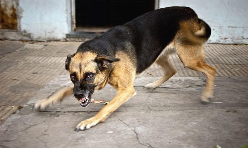 اگر کتا حملہ کردے تو آپ کو کیا کرنا چاہئے؟