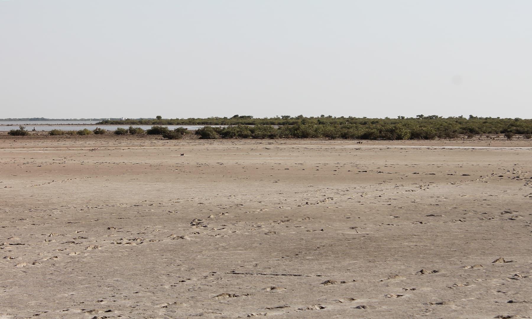 انڈس ڈیلٹا کی موجودہ زمینی پٹی 16 ہزار مربع میل یعنی 41 ہزار 440 مربع کلومیٹرز کے رقبے پر پھیلی ہوئی ہے—تصویر ابوبکر شیخ