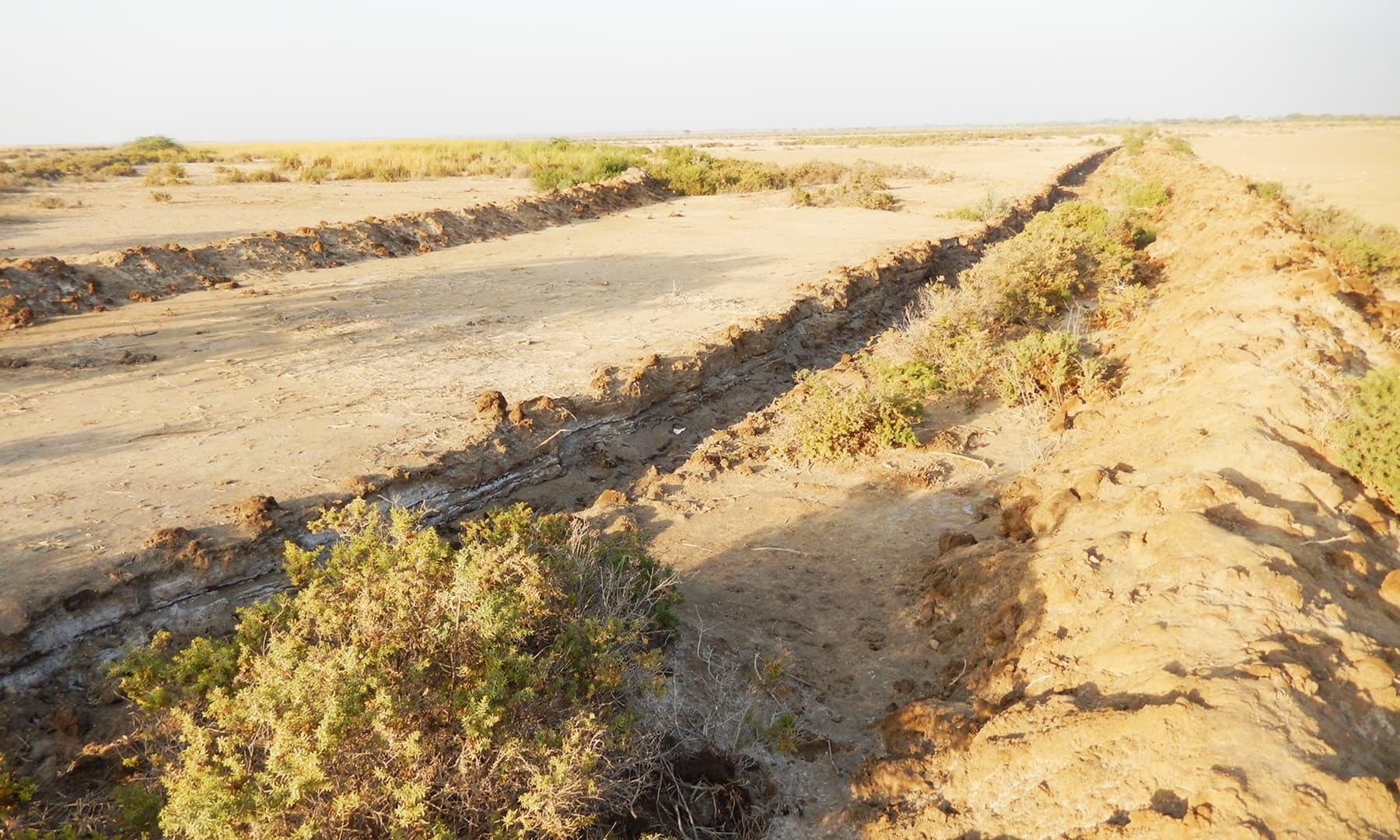 ڈیلٹا کی 35 لاکھ زرعی زمین یا تو سمندر نگل گیا ہے یا سمندر کے شوریدہ پانی کی وجہ سے زمینوں نے اپنی زرخیزی گنوادی ہے—تصویر ابوبکر شیخ