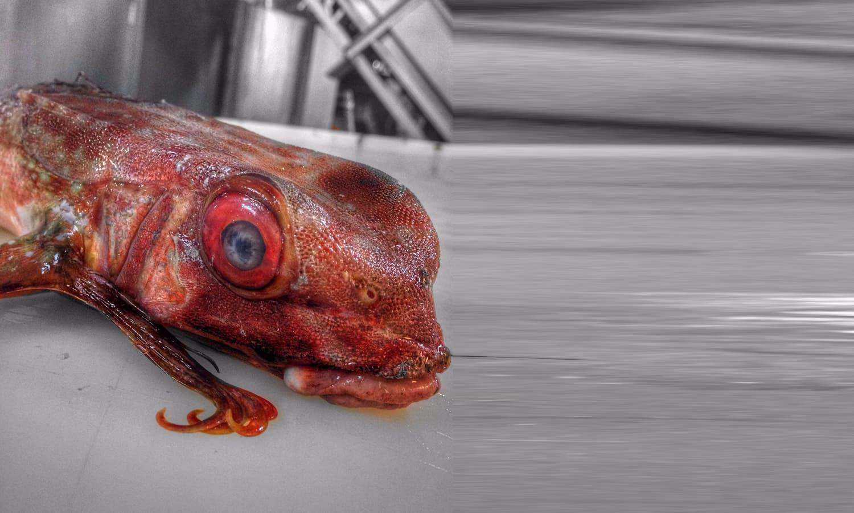 شاید آپ نے ایسی مچھلی کبھی نہیں دیکھی ہوگی —فوٹو : بشکریہ رومان فدرتسو