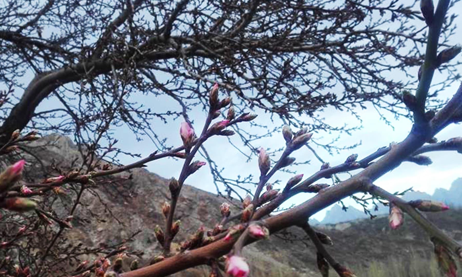 گلگت بلتستان، سردیوں میں کھلے پھول—تصویر نور پامیری