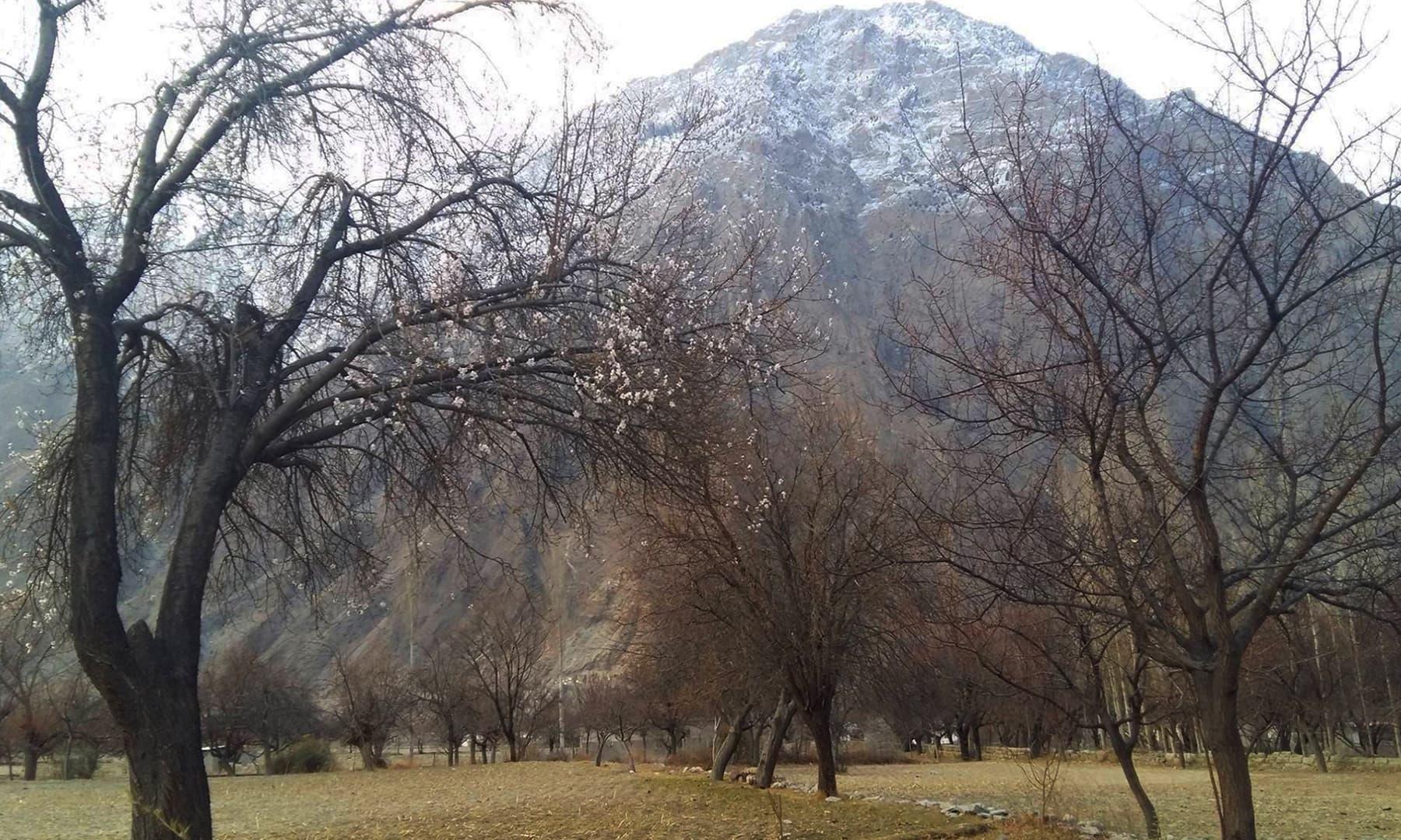 گلگت بلتستان کے ضلع نگر میں کھلے پھول — تصویر حسین نگری
