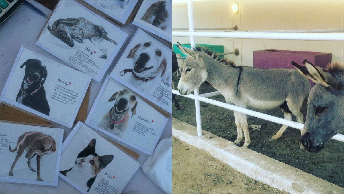 All the money for the shelter has come from like-minded animal loving donors