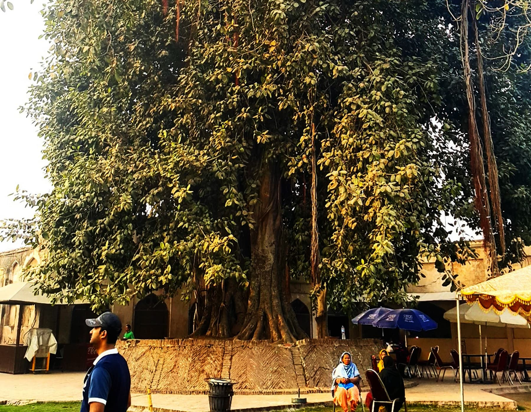 برگد کا درخت— تصویر صوفیہ کاشف