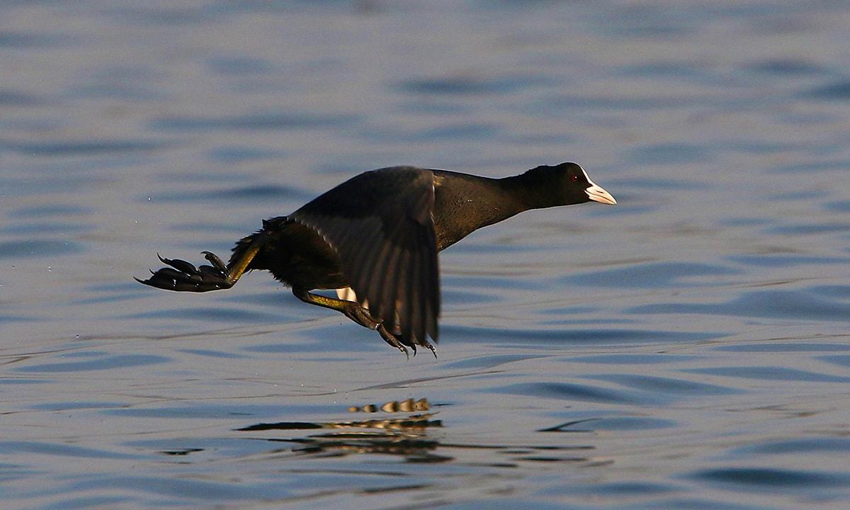 Birds of passage: Winter in Uchhali Lake