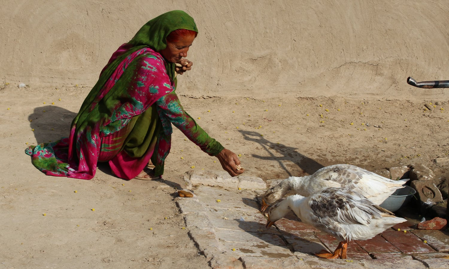 A local woman feeds ducks.