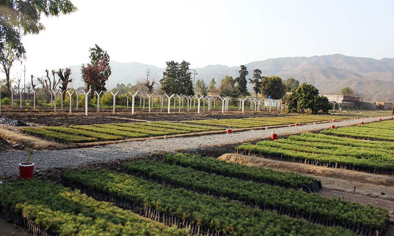 A view of a government-run tree nursery in Haripur, in Khyber Pakhtunkhwa.— Thomson Reuters Foundation