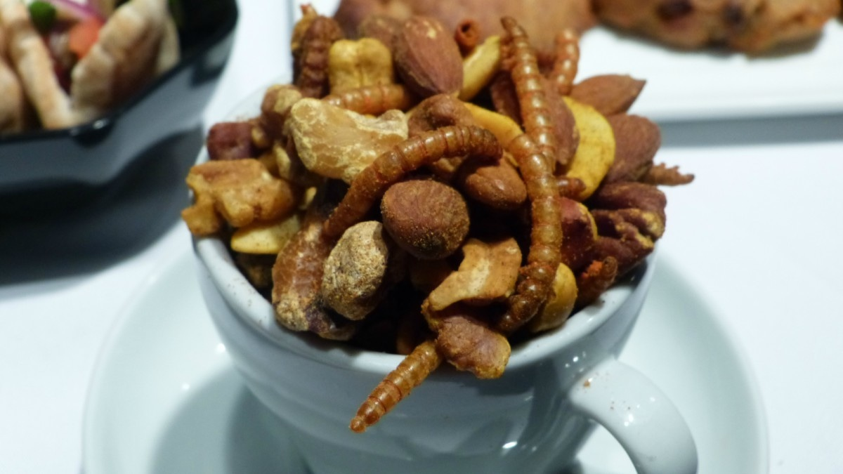 Insect-eating might be the latest food trend. Would you try it?
