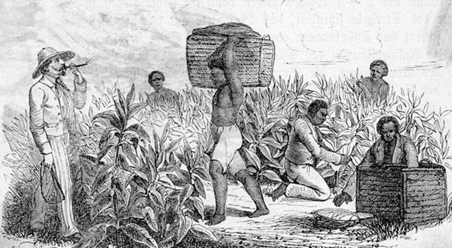 Blacks from Africa were brought to the Caribbean islands by colonialists as slaves. -- Photo: Daily Mail.