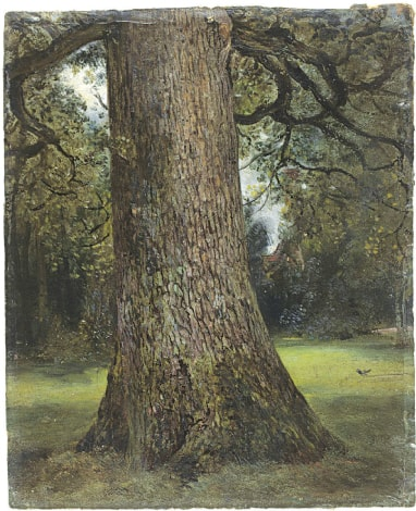 Study of the Trunk of an Elm Tree, (1821-28)