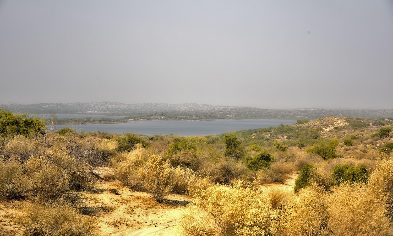 A desert path leading to Kalankar lake from Khanbro Shareef village in Umerkot.