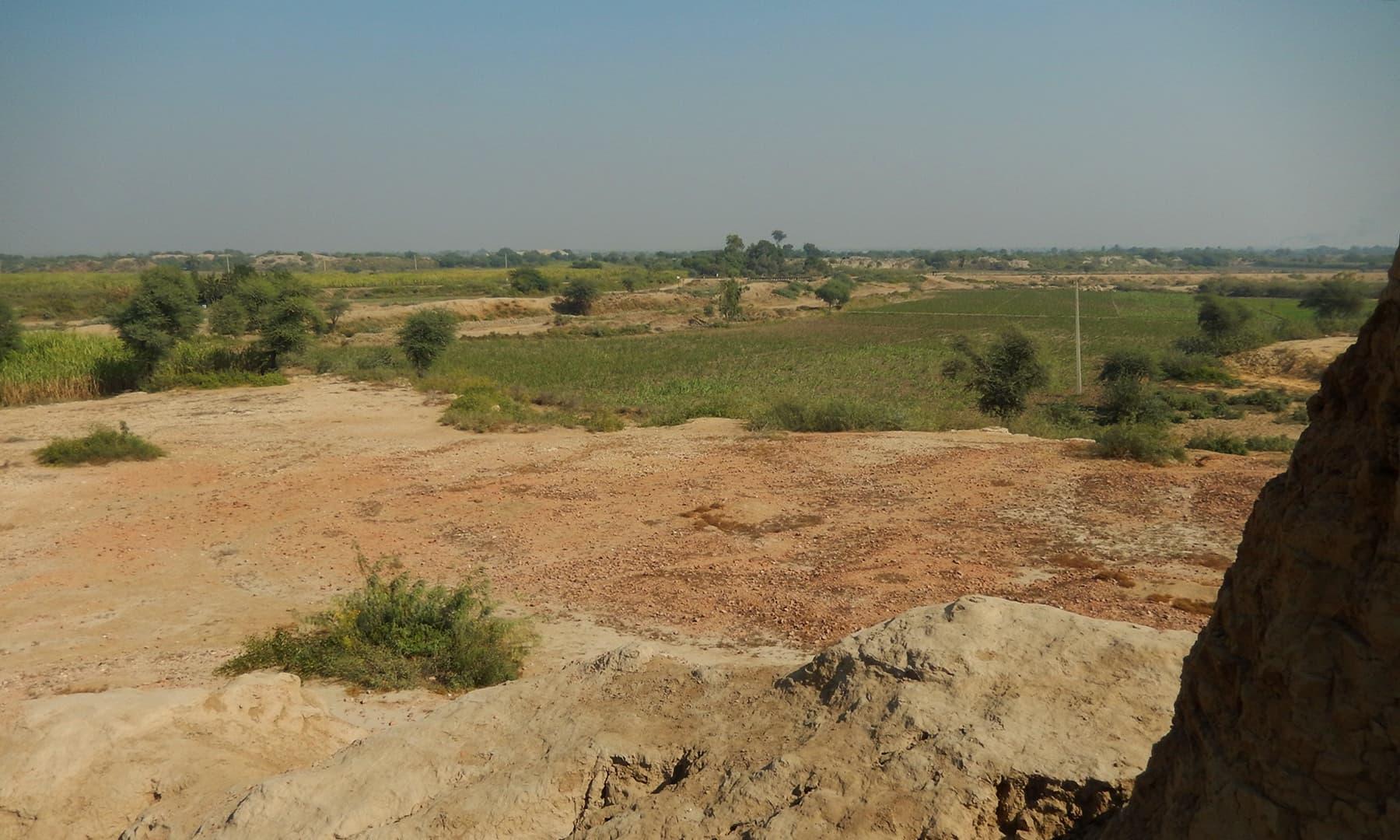بدھ اسٹوپا کی آثار قدیمہ سائٹ پر اگائے جانے والے کھیت— تصویر ابوبکر شیخ