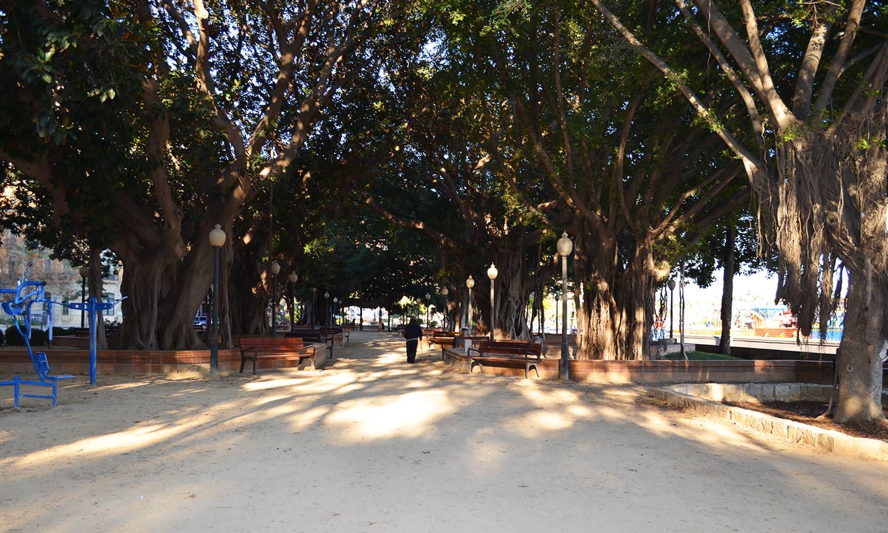 شہر میں نخلستان نما ان جگہوں میں درختوں اور پودوں کو کچھ اس طرح اگایا گیا ہے کہ وہاں بیٹھ کر وقت گزارنے کی جگہ بھی مہیہ ہو جاتی ہے — تصویر رمضان رفیق