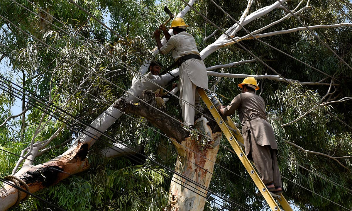 Linemen chop off a tree that fell on a electricity cable during rains in Islamabad | Tanveer Shahzad, White Star