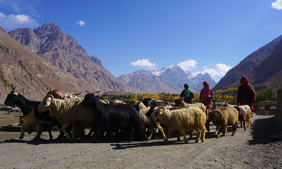 Local women with their herd