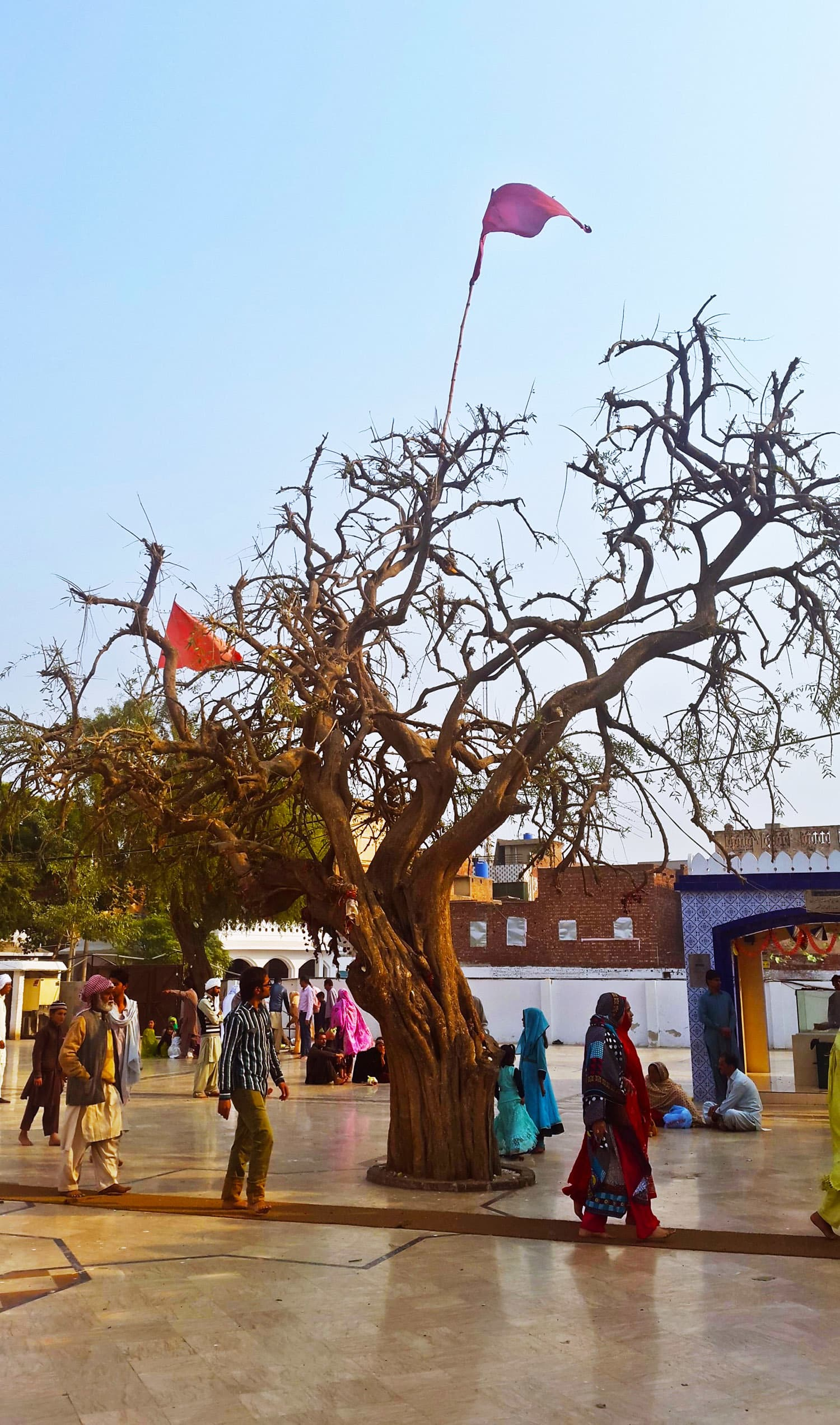 The Tree of Wishes next to Bulleh Shah's tomb.