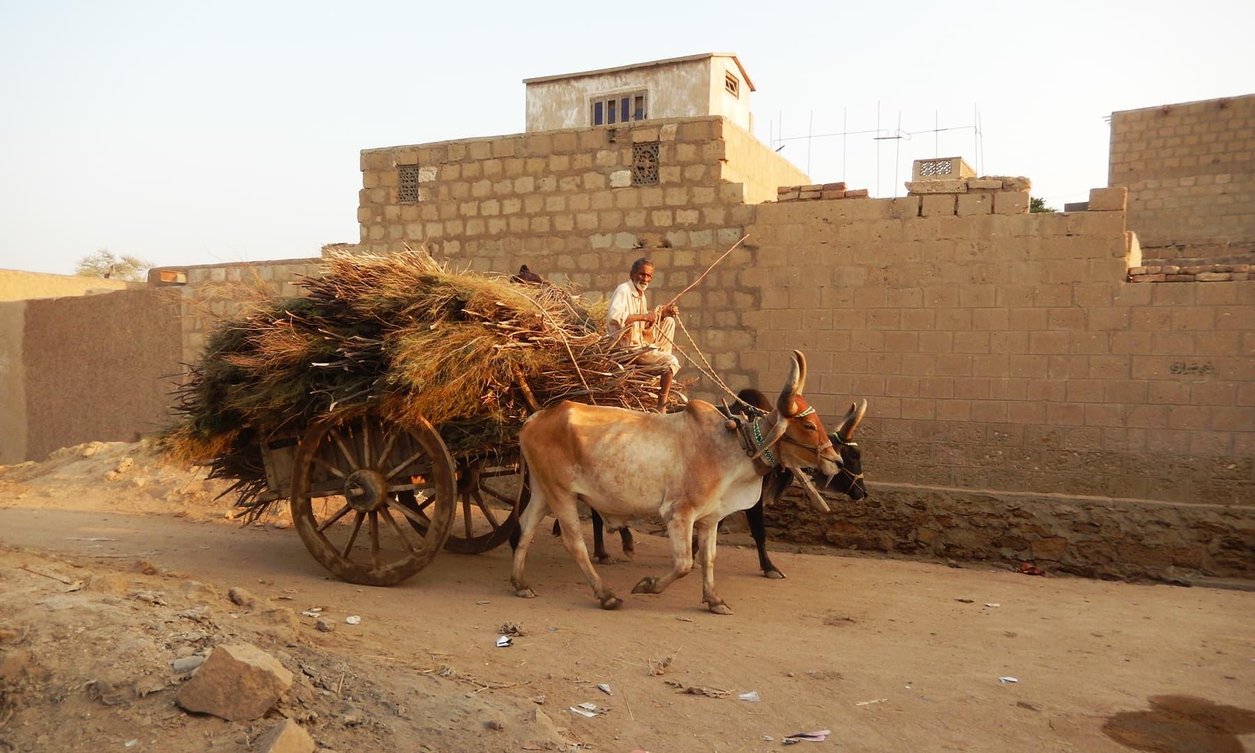 جھرک شہر کی ایک گلی — تصویر ابوبکر شیخ