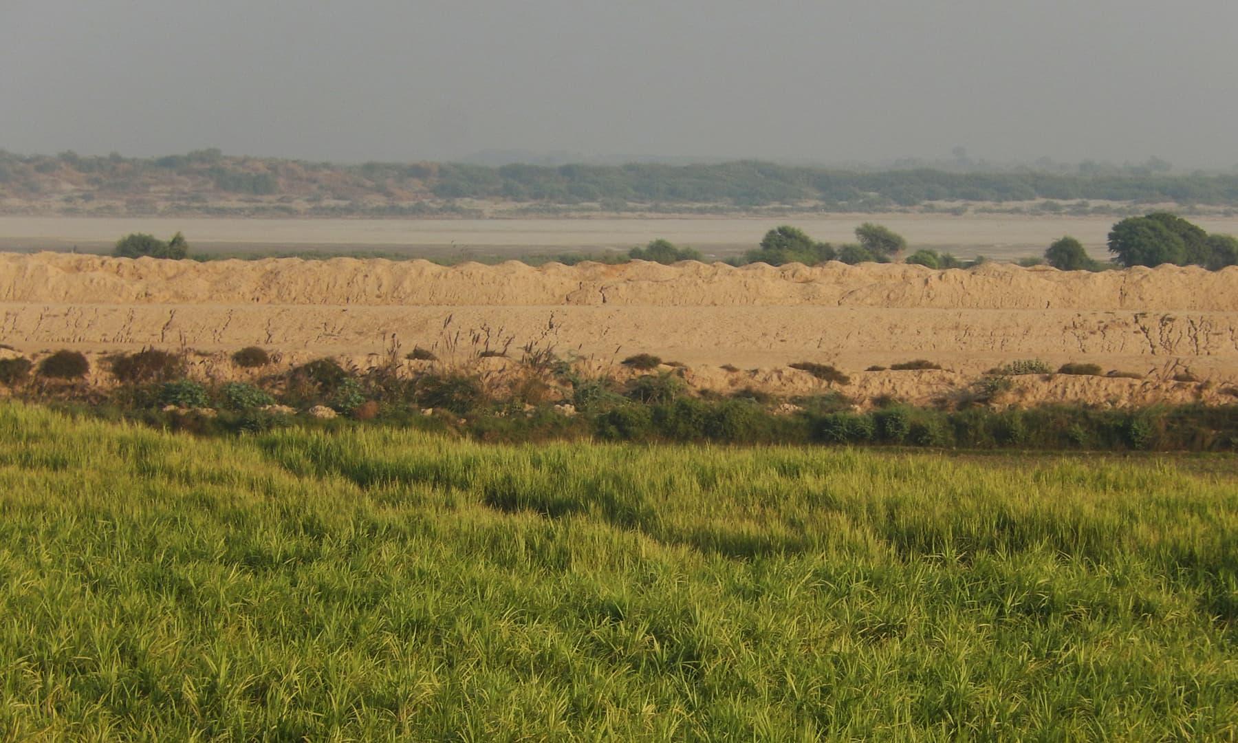 دریائے سندھ کے بہاؤ کا نظارہ  — تصویر ابوبکر شیخ