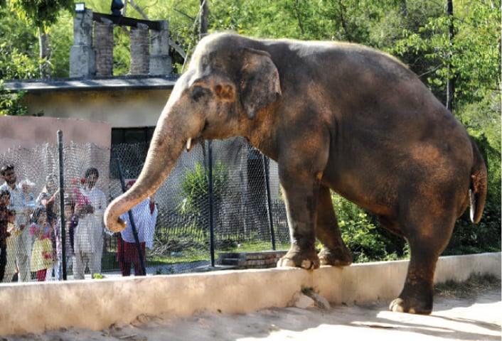 File photo of Kavaan at Marghazar Zoo.