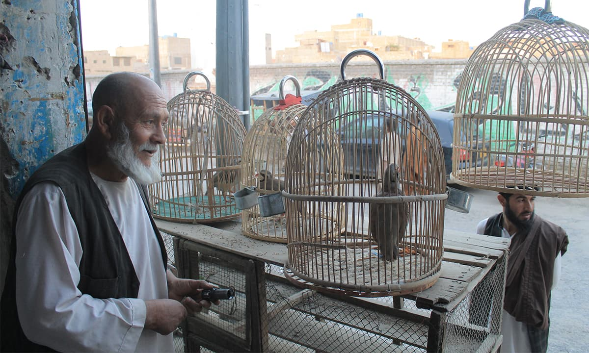 An elderly Afghan selling red-legged partridges in a bazaar of Chaman, a town bordering Afghanistan