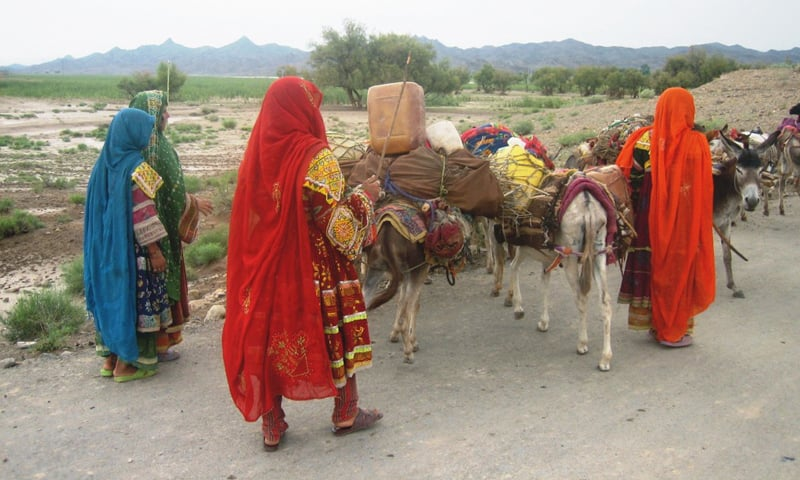 Kochi girls passing through the Zhob River along with their cattle