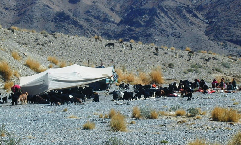 A tent perched in the mountainous area to provide shelter to cattle