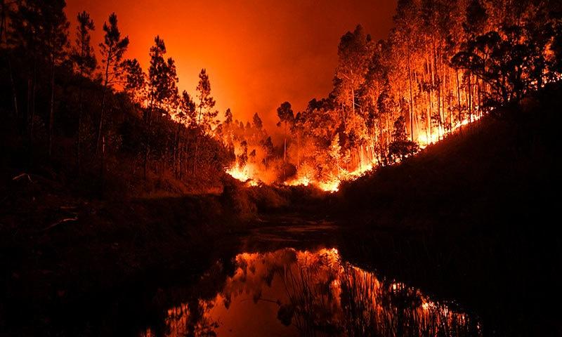 پرتگالی حکام نے جنگل میں لگنے والی آگ کو بھیانک ترین قرار دیا—فوٹواے ایف پی