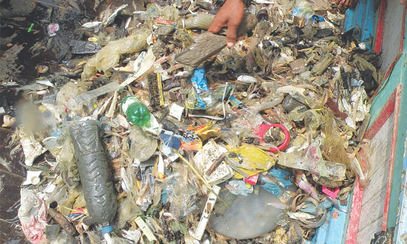 Plastic pollution poses serious threat to marine life
