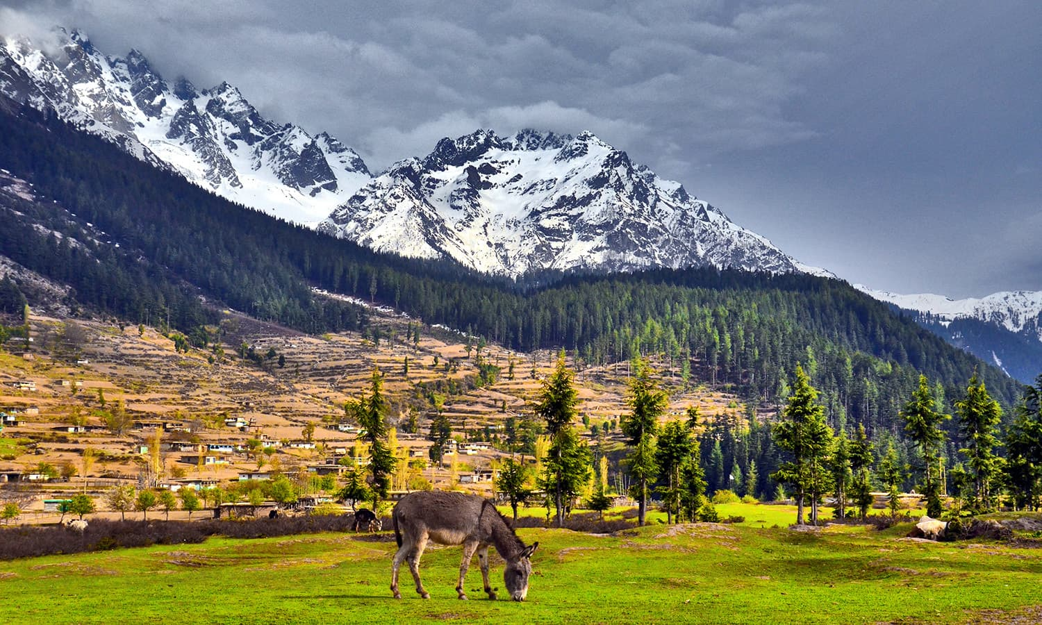 Boyun Meadow, Swat. ─ Photo by Muhammad Akram Attari