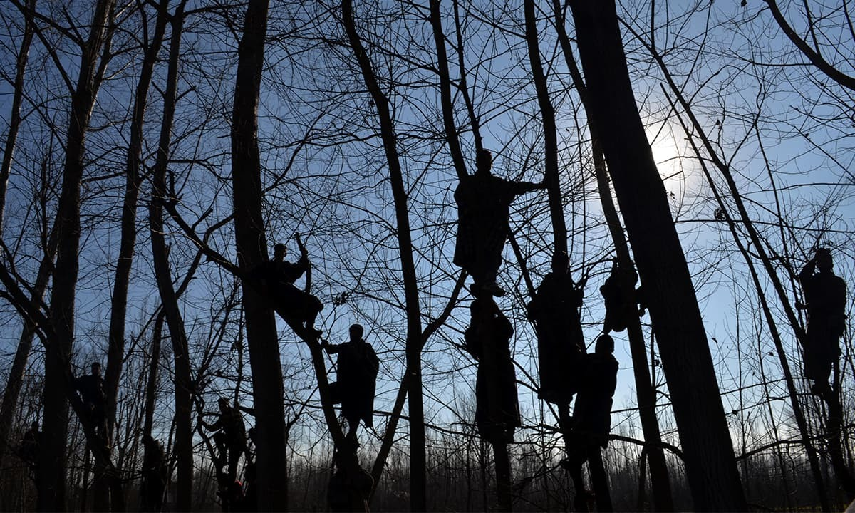 Kashmiris climb trees at the funeral procession of a Hizbul Mujahideen fighter in Pulwama district in January 2016 | Photos by Syed Shahriyar
