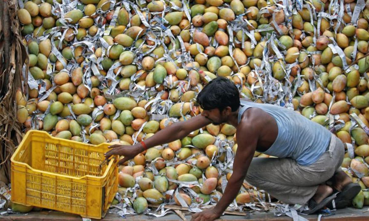 Exploring mangoes as a metaphor in South Asian writing