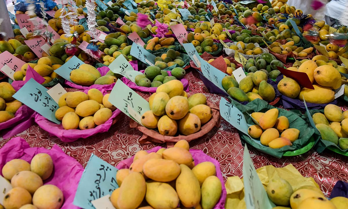Different varieties of mangoes on display at the National Mango and Summer Fruits Festival 2017