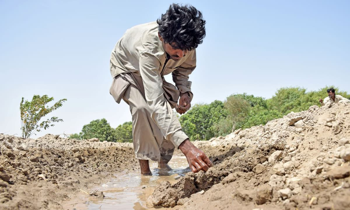A farmer sows cotton seeds at a farm in Tando Allahyar | Umair Rajput